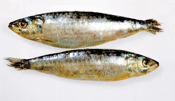 2º cumpleaños de Mathilda 021006_sardinas