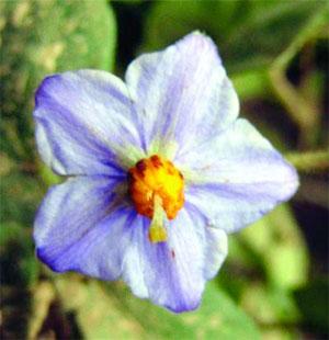 Una planta lleva el nombre de la primera mujer navegante for Plantas decorativas con sus nombres