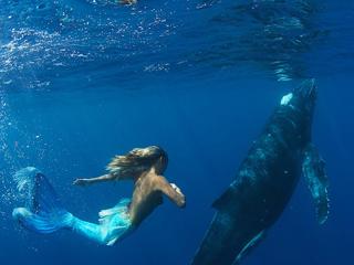 Tour Delfines Cancun