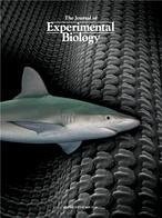 El La Poder TiburónReveladoNuestromar De Piel DYEIHbeW29